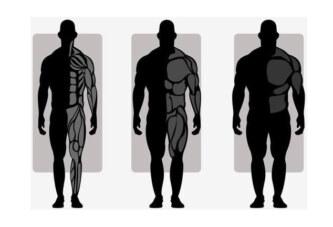 Hangi Vücut Tipine Sahipsiniz ve Buna Göre Nasıl Beslenmeniz Gerekiyor